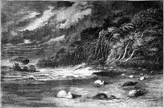 Gale on the Ucayali River, vintage engraving. Stock Illustration