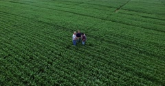 Aerial fly toward 2 farmers and consultant inspect uprooted soybean plant Stock Footage
