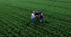 Aerial MS of 2 farmers and consultant inspecting GMO soybean plant. Stock Footage