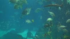 Lisbon Oceanarium fish feeding Stock Footage