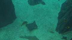 Rays bracken, shark rays and other types of Stock Footage