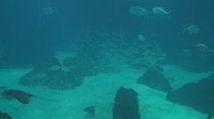 Lisbon oceanarium Stock Footage