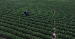 Aerial view of 2 farmers taking notes, walking, and inspecting GMO soybean field Stock Footage