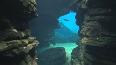 Underwater cave diving penguins Stock Footage