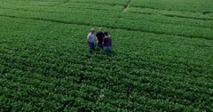 Aerial view of 2 farmers and consultant inspecting lush GMO soybean field Stock Footage