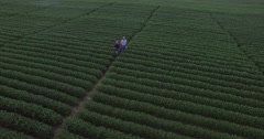 Aerial pullback from 2 farmers inspecting lush GMO soybean field Stock Footage