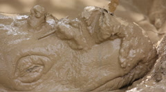 Sumatran rhinoceros in the mud bath, really close-up Stock Footage