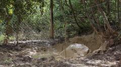 Sumatran rhinoceros, mud bath Stock Footage
