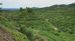 Panoramic view of Huge Palm oil Plantation, deforestatio Stock Footage