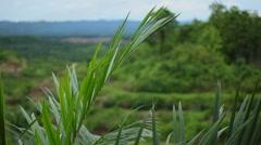 Palm Oil Plants, Malaysia Stock Footage