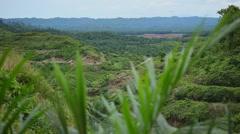 Panoramic view, palm oil Plantation Stock Footage