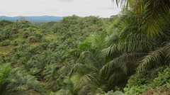 Palm Oil, Deforestation Stock Footage