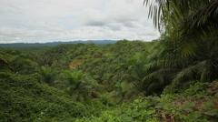 Palm Oil plantation Stock Footage