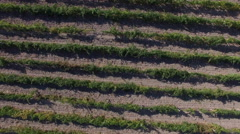 4K Flying over vineyards & wine leaves / Beautiful nature aerial shot Stock Footage