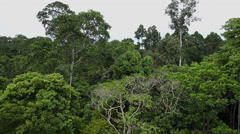 Canopy view Bornean rainforest Stock Footage