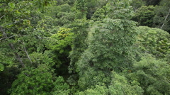 Bornean Rainforest, Malaysia filming from tree Stock Footage