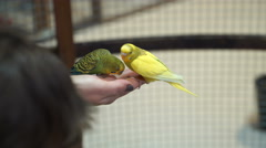 Footage People are fed up with hand budgies. 4K Stock Footage
