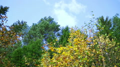 Awesome autumn forest. The tops of the trees bear against the blue sky Stock Footage