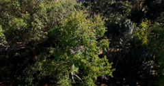 Aerial of parkland Stock Footage