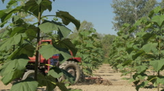 Farmer cultivating ground at plantation of trees, crane shot by Sheyno Stock Footage