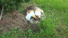 Sleeping cat outdoors, 4K Stock Footage