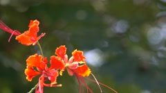 Bunch of Orange Color Flowers with Bokeh Background 4K Stock Footage