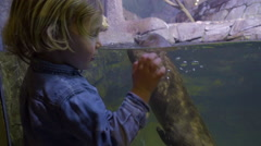 Excited Little Boy Watches Otter Dive Underwater In Tank, He Watches In Wonder Stock Footage