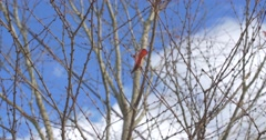 Last Autumn Leaf hanging on Branch, Steady Tripod Stock Footage