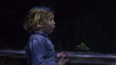 Excited Child Looks At Aquarium Tank Stock Footage