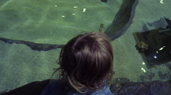 Little Boy Watches As Sting Ray Swims Past In Petting Tank At Aquarium Stock Footage