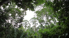 Sabah Borneo Malaysia Asia Rainforest Sky Stock Footage