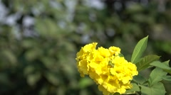 Bunch of Yellow Flowers with Bokeh Background 4K Footage Stock Footage