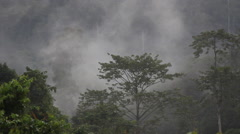 Cloudy day in the rainforest, Borneo Stock Footage