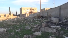 Syria, - February, 2016: Sheeps, SDF,ISIS war, SDF – YPJ,YPG Stock Footage