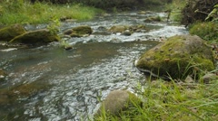 Creek in a Forest - A clear creek in a forest Stock Footage