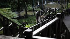 Tabin Wildlife Resort, Malaysia Stock Footage