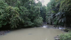 Small river in the Rainforest, Tabin Wildlife Reserve Stock Footage