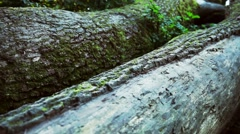 Legs mother and a little girl on a log. Nature, values, family Stock Footage
