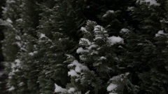 Winter, snow, fir. Falling snowflakes Stock Footage