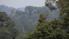 Rainforest in Borneo, Malaysia landscape footage Stock Footage