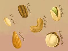 Digital painting of healthy nuts macadamia, peacan, cashew, pine nut, almond  Stock Illustration