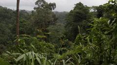 Tabin Wildlife Reserve, rainforest, slider Stock Footage