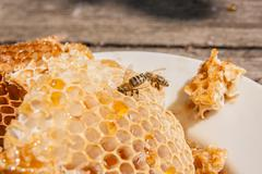 Close up view of the working bee on the honeycomb with sweet honey. White pla Stock Photos