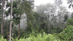 Beauty and cloudy rainforest, Borneo Stock Footage