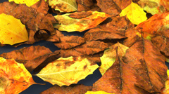 Decomposed leaves Stock Footage