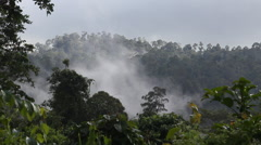 Cloudy Huge Rainforest, Tabin Wildlife Reserve, Malysia Stock Footage