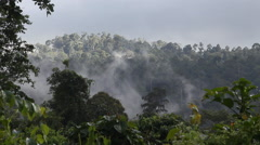 Huge Rainforest, Tabin Wildlife Reserve, Malysia Stock Footage