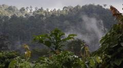 Huge Rainforest, Tabin Wildlife Reserve Stock Footage