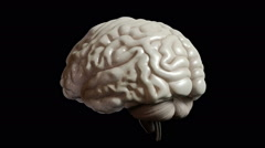Human organs (brain) on black background. High resolution. 3D render Stock Footage