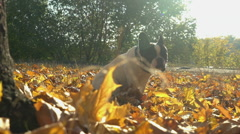Small dog sits outdoors in september Stock Footage